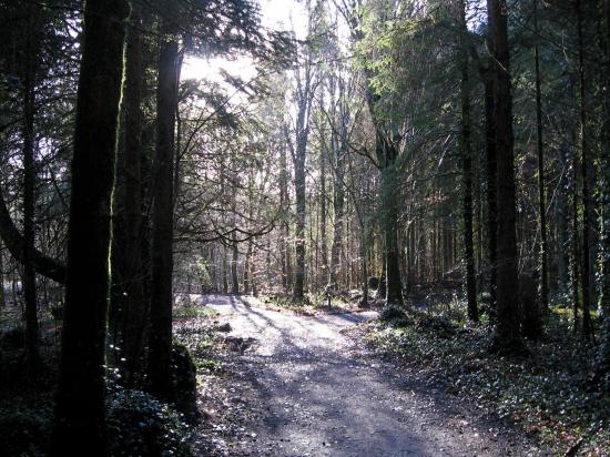 Elysium - Coole Park, Ireland